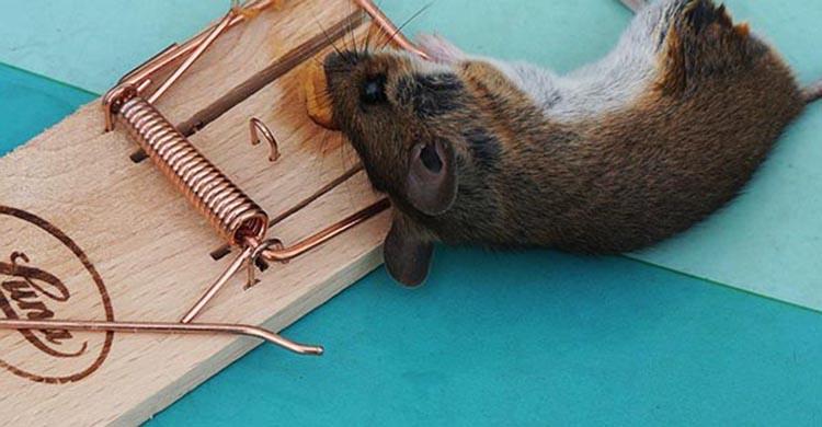 dịch vụ diệt chuột đà nẵng